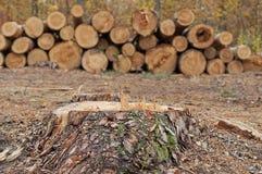 Het snijden van bomen Stock Afbeeldingen