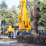 Het snijden van een grote boom in een stad Royalty-vrije Stock Foto's