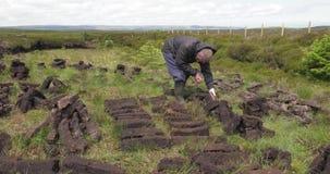 Het snijden van en het passen van grasturf met een spade in mosmoeras in Ierland stock video