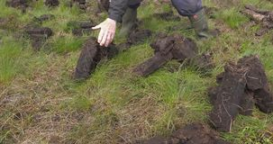 Het snijden van en het passen van grasturf met een spade in mosmoeras in Ierland stock videobeelden