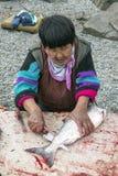 Het snijden van enkel catched zalm op de bank van Anadyr-firth, Chukotka stock fotografie