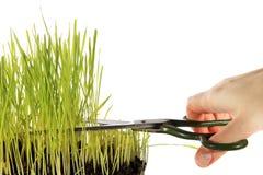 Het snijden van het Gras Royalty-vrije Stock Afbeelding