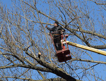 Het snoeien van bomen die een lift-wapen met behulp van royalty-vrije stock afbeeldingen