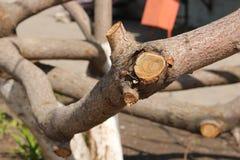 Het snoeien van bomen, fragment royalty-vrije stock foto's