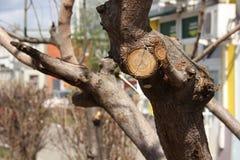 Het snoeien van bomen, fragment stock fotografie