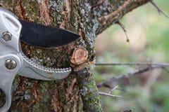 Het snoeien van boom stock afbeelding