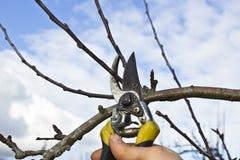 Het Snoeien van de boom stock fotografie