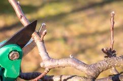 Het snoeien van jonge fruitbomen met tuinschaar royalty-vrije stock afbeelding