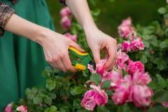 Het snoeien van tuin Royalty-vrije Stock Afbeelding