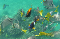 Het snorkelen in Cabo! Royalty-vrije Stock Foto's