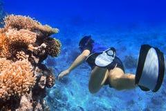 Het snorkelen in het Rode Overzees van Egypte Stock Foto