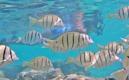 Het snorkelen met tropische vissen royalty-vrije stock foto