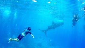 Het snorkelen van Filippijnen Cebu let de vrije duik op whaleshark Royalty-vrije Stock Afbeeldingen
