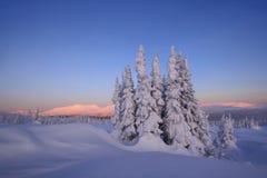 Het snow-bound bos is in de bergen van het Noorden royalty-vrije stock fotografie