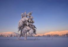 Het snow-bound bos is in de bergen van het Noorden Ural Stock Foto's