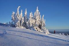 Het snow-bound bos is in de bergen van het Noorden Ural royalty-vrije stock foto