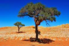 Het sociale nest van de Wever op een boom (Namibië) royalty-vrije stock afbeelding