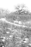 Het sombere Landschap van de Winter stock foto's