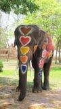 Het Songkranfestival wordt gevierd met olifanten in Ayutthaya Royalty-vrije Stock Foto's