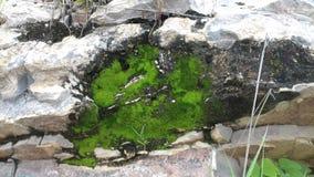 Het soort groene kleine installatie op de rotsberg Stock Afbeeldingen