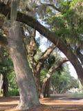 Het Spaanse Mos bloeit op de bomen en de struiken in Zuid-Carolina royalty-vrije stock fotografie