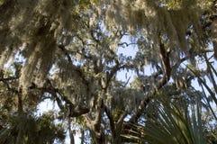 Het Spaanse mos hangen van boom Stock Foto's