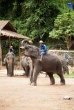 Het speelbasketbal van de olifant Stock Fotografie