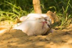 Het speelse babykat stellen aan de camera Stock Fotografie