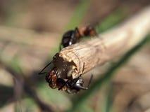 Het speelspel van het mierenras stock foto's
