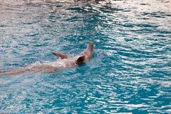 Het spel van de dolfijn Stock Fotografie