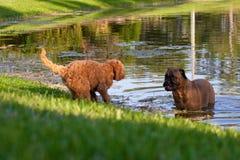 Het spel van de hond Stock Foto