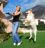 Het spel van de hond en van het meisje togheter Royalty-vrije Stock Foto