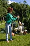 Het spel van de vrouw met vos-terriër Royalty-vrije Stock Fotografie