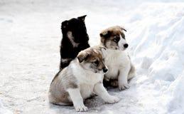 Het spel van huisdieren Royalty-vrije Stock Afbeelding
