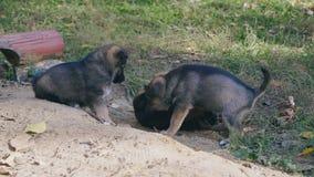 Het spel van puppyhonden in aard stock videobeelden