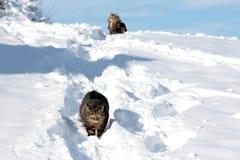Het spelen in de sneeuw geeft genoegen Royalty-vrije Stock Fotografie