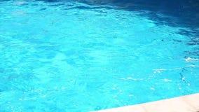 Het spelen dolfijn stock video
