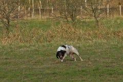 Het spelen herdershond in een groen milieu stock foto