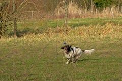 Het spelen herdershond in een groene weide royalty-vrije stock foto's