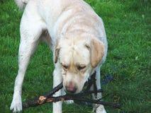 Het spelen hond 3 royalty-vrije stock afbeelding
