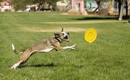 Het spelen hond Stock Foto's