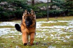 Het spelen hond Royalty-vrije Stock Foto's