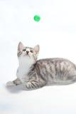 Het spelen kat Stock Fotografie