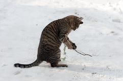 Het spelen kat Stock Afbeeldingen