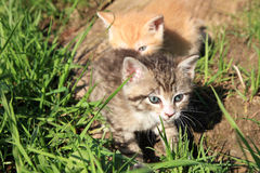 Het spelen kleine katten Royalty-vrije Stock Foto