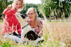 Het spelen met de hond in de zon Stock Foto