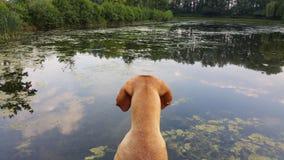 Het spelen met de honden stock foto's