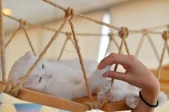 Het spelen met kat Royalty-vrije Stock Fotografie
