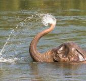 Het spelen olifant ElephantsWold Thailand Royalty-vrije Stock Afbeelding