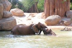 Het spelen olifanten die bad nemen Stock Afbeelding